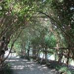 Arbor at Morikami Gardens.