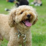 Therapy Dog_2_150716